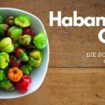 Habanero-Chilis: der Name kommt aus Havanna, gegessen werden sie dort aber nicht