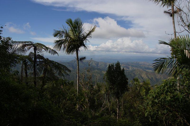 Bild einer Königspalme vor Berghintergrund
