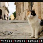 Katzenkalender gegen die Not der Straßenkatzen